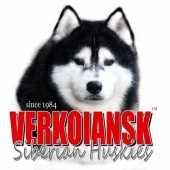 Verkoiansk Siberians
